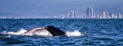 11354169603_d1da2dcc07_whales-gold-coast