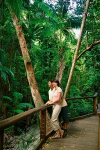 Rainforest Fraser Island Central Station