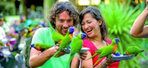 Bird Feeding Currumbin Wildlife Sanctuary Gold Coast