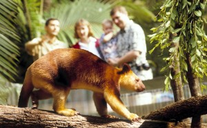 Currumbin Wildlife Sanctuary Gold Coast 06